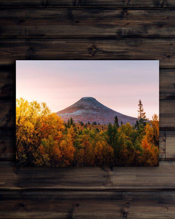 Canvas Höst träd soluppgång Städjan