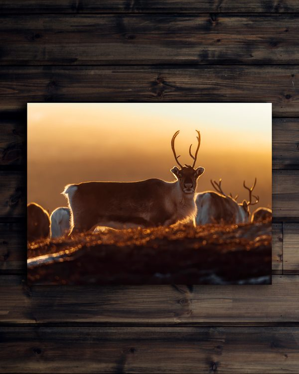 Canvas Ren i glödande soluppgång