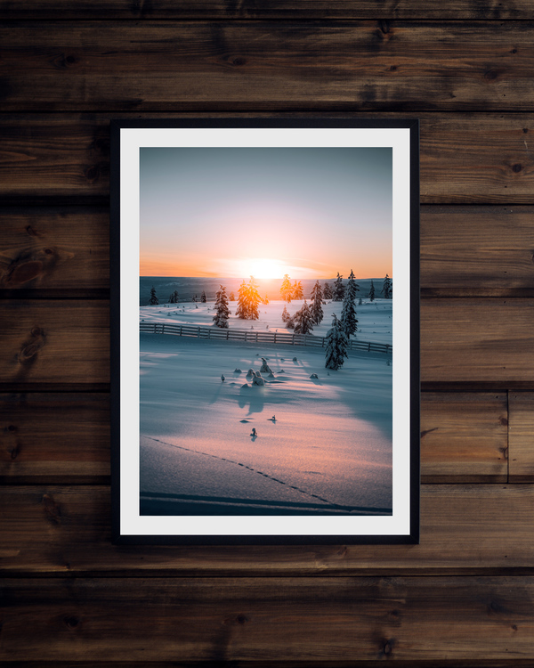 Solnedgång bland träden