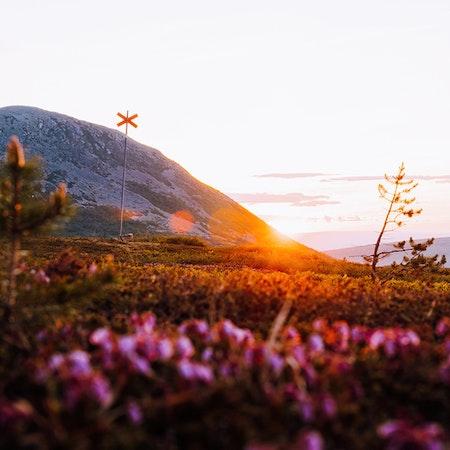 Soluppgång sommar Nipfjället