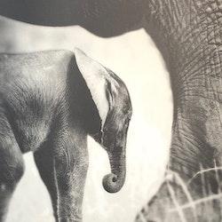 Baby Elephant I