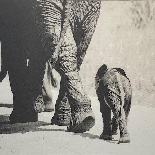 Baby Elephant II