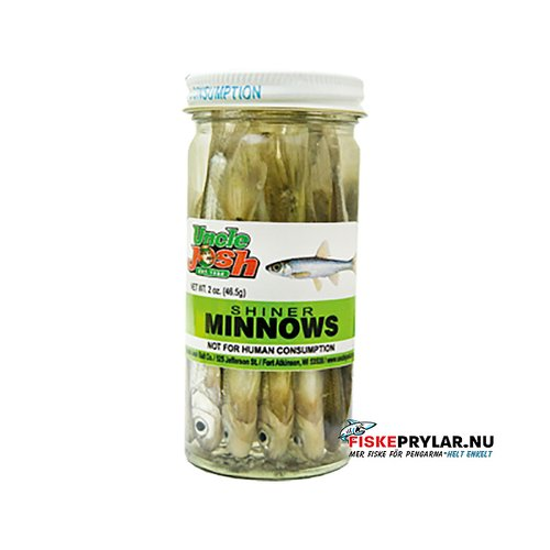 Shiner Minnows, large model