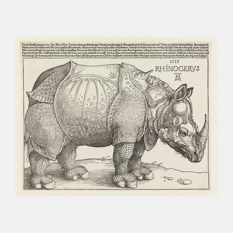 Rhinocervs – Noshörning – 1515