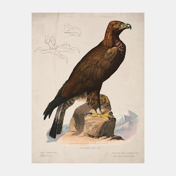 Poster – Golden Eagle – 1872