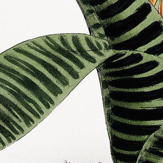 "John Nugent Fitch – ""A plant"" – 1880"
