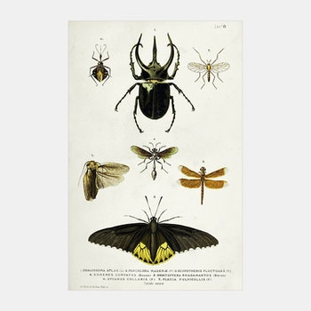 Bild – Insekter – 1885