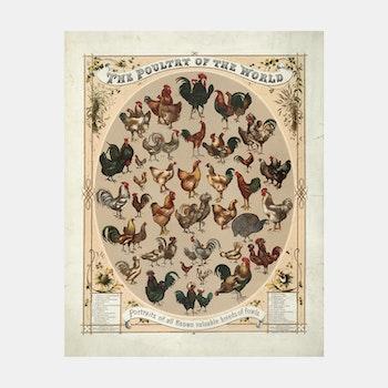 Bildkonst – Hönor & tuppar – 1868