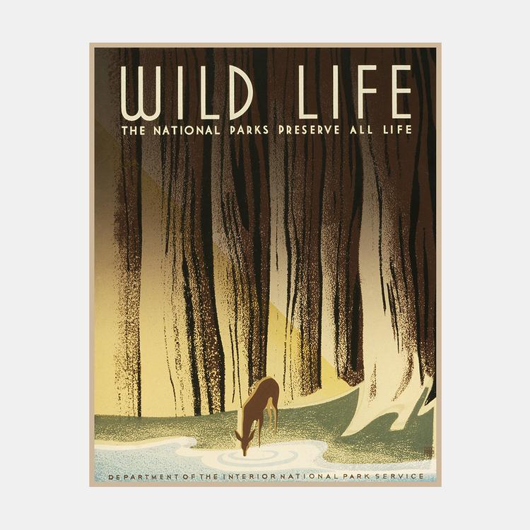 "Poster – ""Wild Life"" – 1936"