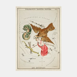 Poster – Stjärnbild, Delphinus, Sagitta, Aquila and Antinous – 1825