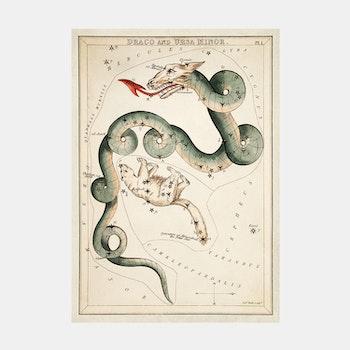 Poster – Stjärnbild, Draco and Ursa Minor – 1825