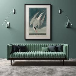 Poster – Silvertärna – 1827