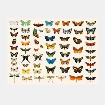 Poster – Fjärilar – 1892
