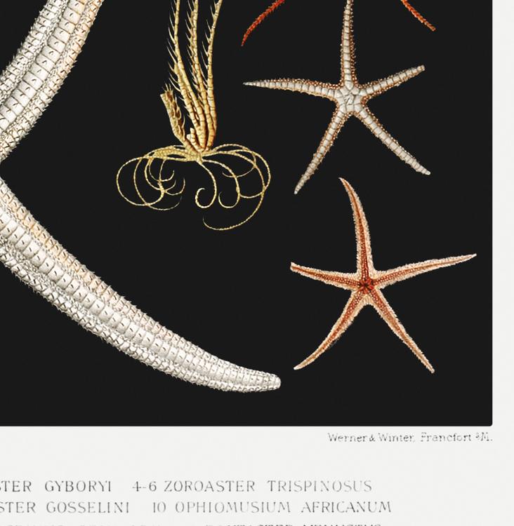 Poster – Sjöstjärnor II – 1912