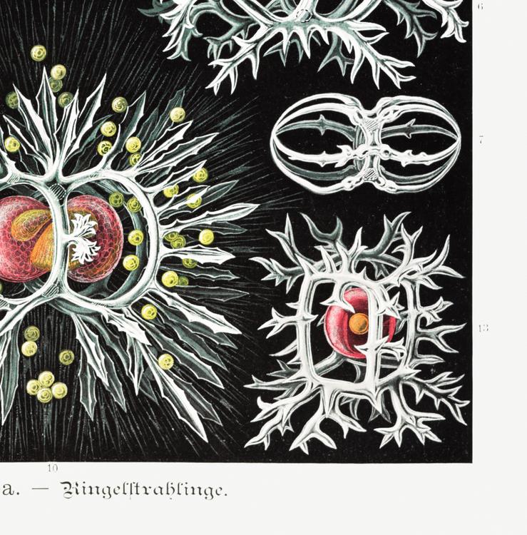 Poster – Microorganismer – 1904