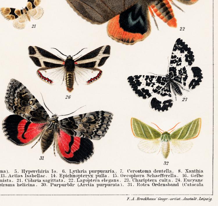 """Poster - Fjärilar """"Schmetterlinge. II."""" – 1894"""