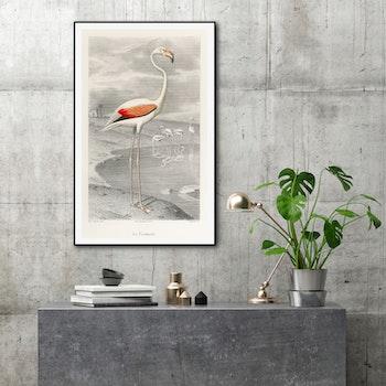 Poster – Flamingo – 1853