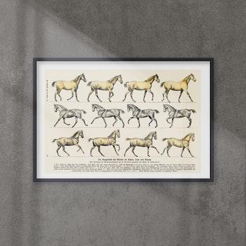 Poster – Hästar – 1900