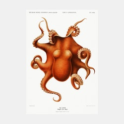 Poster – Bläckfisk – 1898