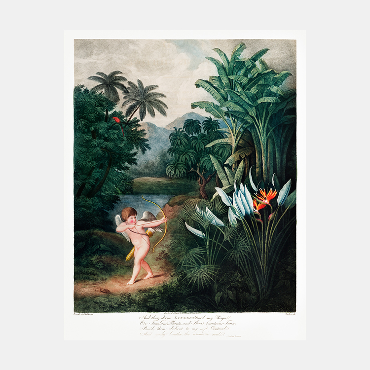 """Poster – """"Cupid"""" – 1807"""