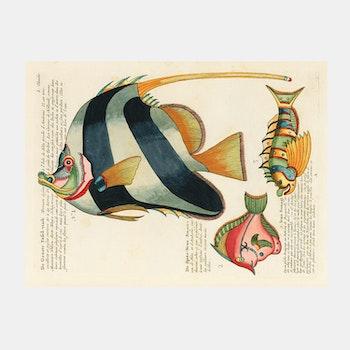 """Poster – """"Fiskar"""" – 1754"""