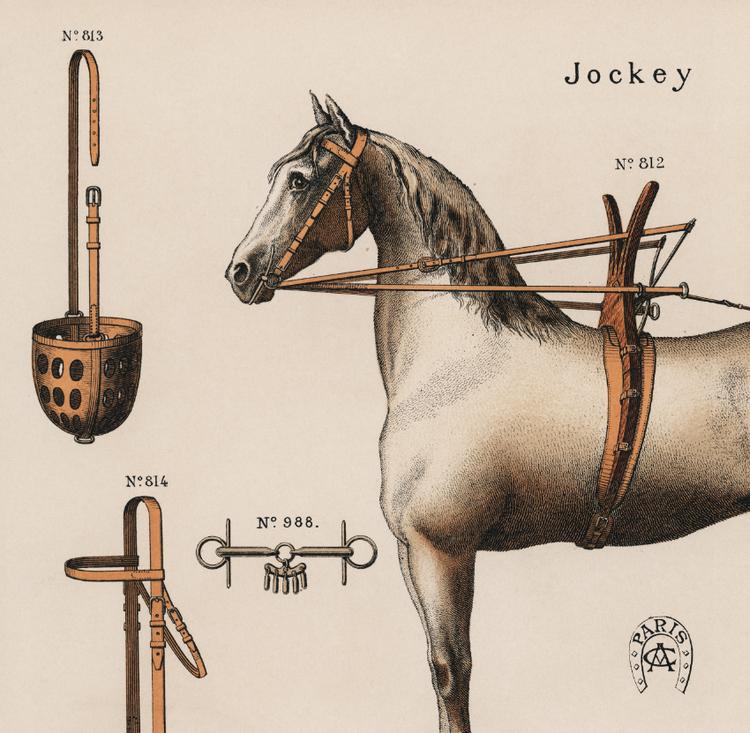 Bild – Hästar och dess utrustning – 1890