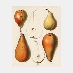 """Poster – """"Päron"""" – 1887"""