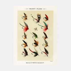 Trout Flies – fiskedrag – 1870