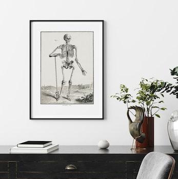 Skelett – Anatomie, fig 1 – 1770-tal