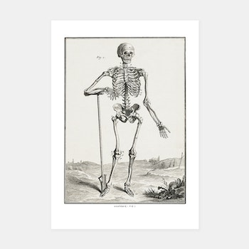 Skelett – Anatomie, fig 1 – 1770-tal