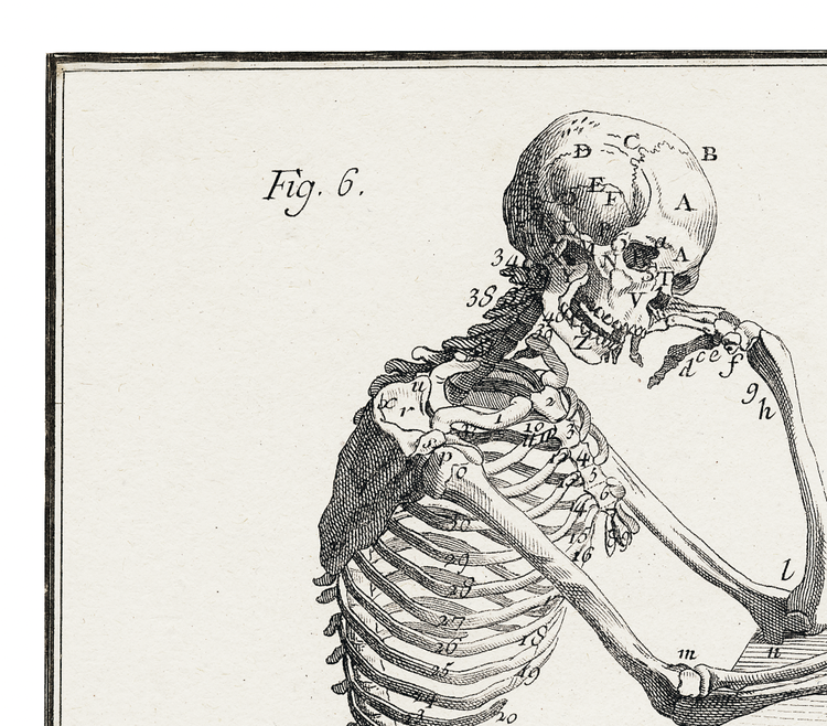 Skelett – Anatomie, fig 6 – 1770-tal