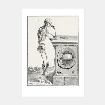 Skelett – Anatomie, fig 6 – 1770-tal