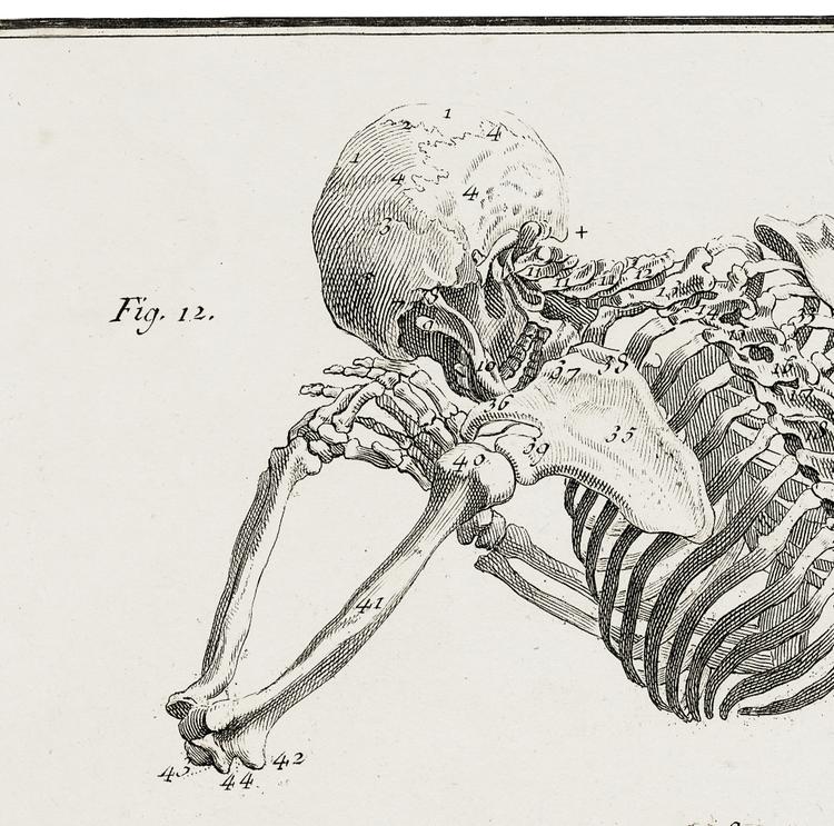 Skelett – Anatomie, fig 12 – 1770-tal