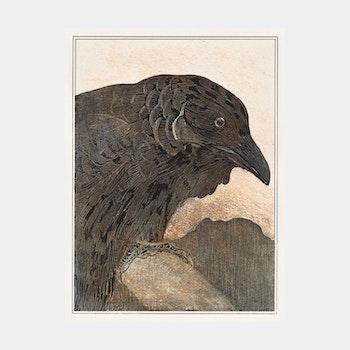 Kraai – Theo van Hoytema – 1908