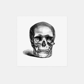 Kranium – Emma Dent – 1877