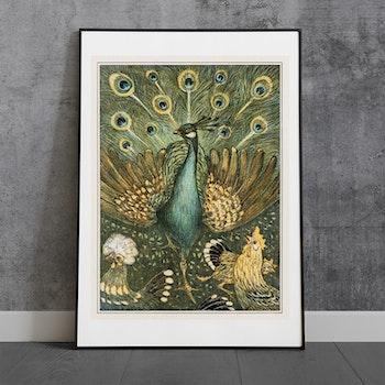 Påfågel – Theo van Hoytema – 1908