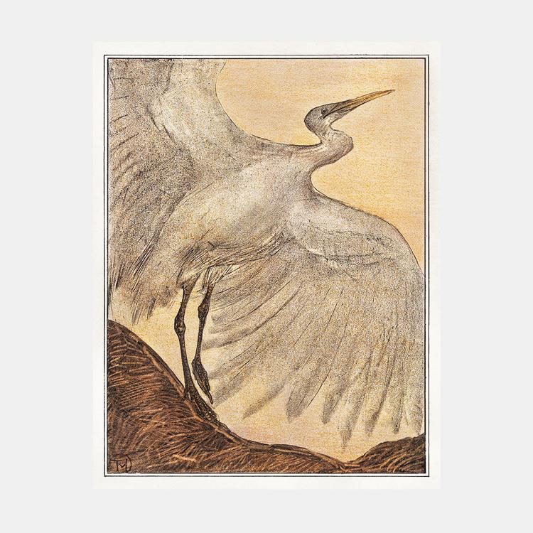 Zilverreiger – Theo van Hoytema – 1905