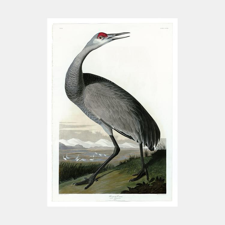 Bildkonst – Tranan – 1827
