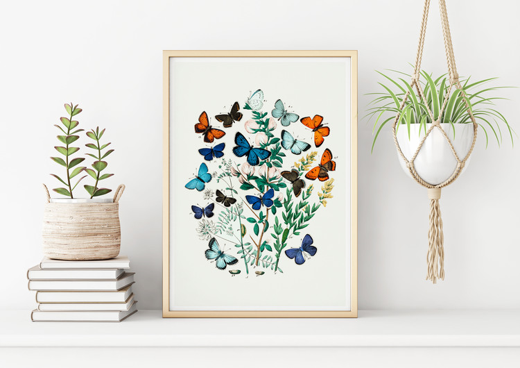 Poster – Fjärilar & larver II – 1882