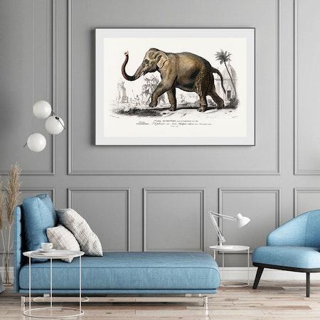 Poster – Elefant – 1892