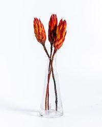 Protea Repens 3 st. - Röd