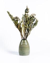 Brunia Nodiflora - Silver