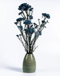 Konserverad Diosmi - Blå