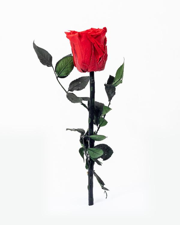 Singel Evighetsros - Röd