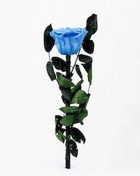 Singel Evighetsros - Blå