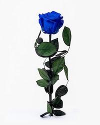 Singel Evighetsros - Mörkblå