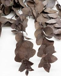 Kopia Eucalyptus cinerea - grön blå