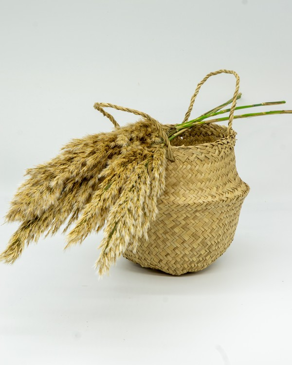 Konserverade Pampasgräs - brun