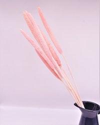 Babala - Blekt rosa