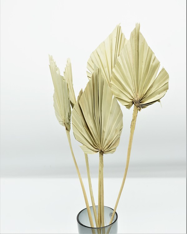 Palm Spear  - Naturell